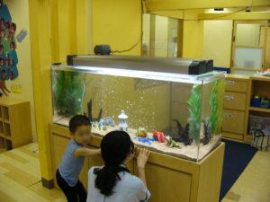 幼稚園様 お子様も見やすい水槽