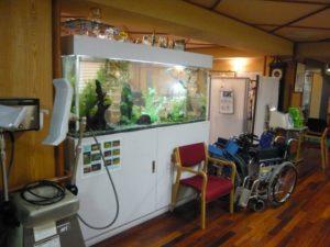 介護施設様 大人気のエンゼルフィッシュ水槽です