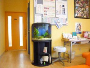 病院様 半円の優しい雰囲気の水槽