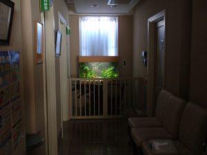 婦人科医院様 優しく浮かぶ水草水槽