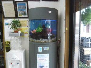 企業様 明るい店内にぴったりの淡水魚水槽です