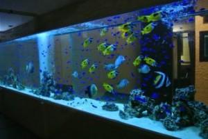 飲食店様 圧巻の8m海水魚水槽