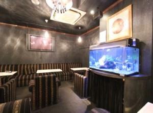 飲食店様 華やかな淡水魚水槽をメンテナンス