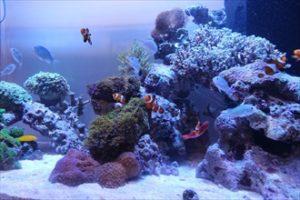 個人宅様 サンゴと熱帯魚に癒されます