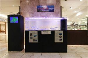短期イベント ヒメマスを展示した大型水槽です