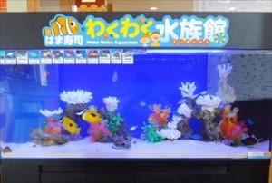北九州市 飲食店様 カラフルなレイアウト水槽です!