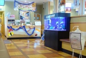 八女市 回転寿司チェーン店様 楽しい水槽です!