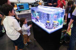 短期イベント たくさんの注目を集める展示水槽