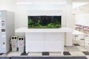 住宅展示場様 印象に残るレイアウト水槽です!