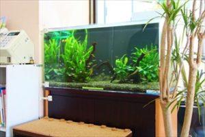 グリーンを基調とした水槽は癒し効果抜群!