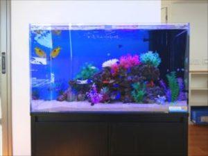 薬局様 複雑な岩山を南洋の魚たちが泳ぎます!