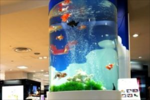 熊本県 熊本市 金魚の大型円柱水槽
