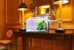ホテル様 エレベーターホールに60cm淡水魚水槽