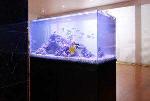 TV番組様 短期レンタル海水魚水槽