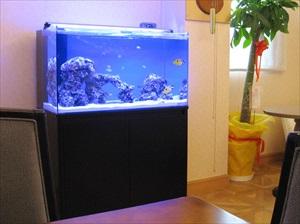 産婦人科クリニック様 癒しの海水魚水槽