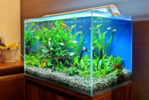 個人宅様 リビングに45cm淡水魚水槽を設置