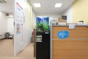 教育施設様 受付に30cm淡水魚水槽を設置