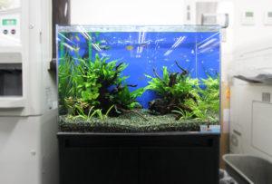 企業様 オフィスに60cm淡水魚水槽