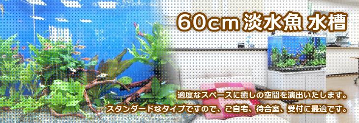 水槽レンタル 60cm淡水魚水槽
